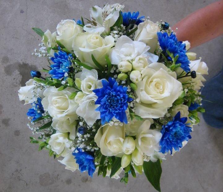 pruudikimp sinine ja valge.jpg