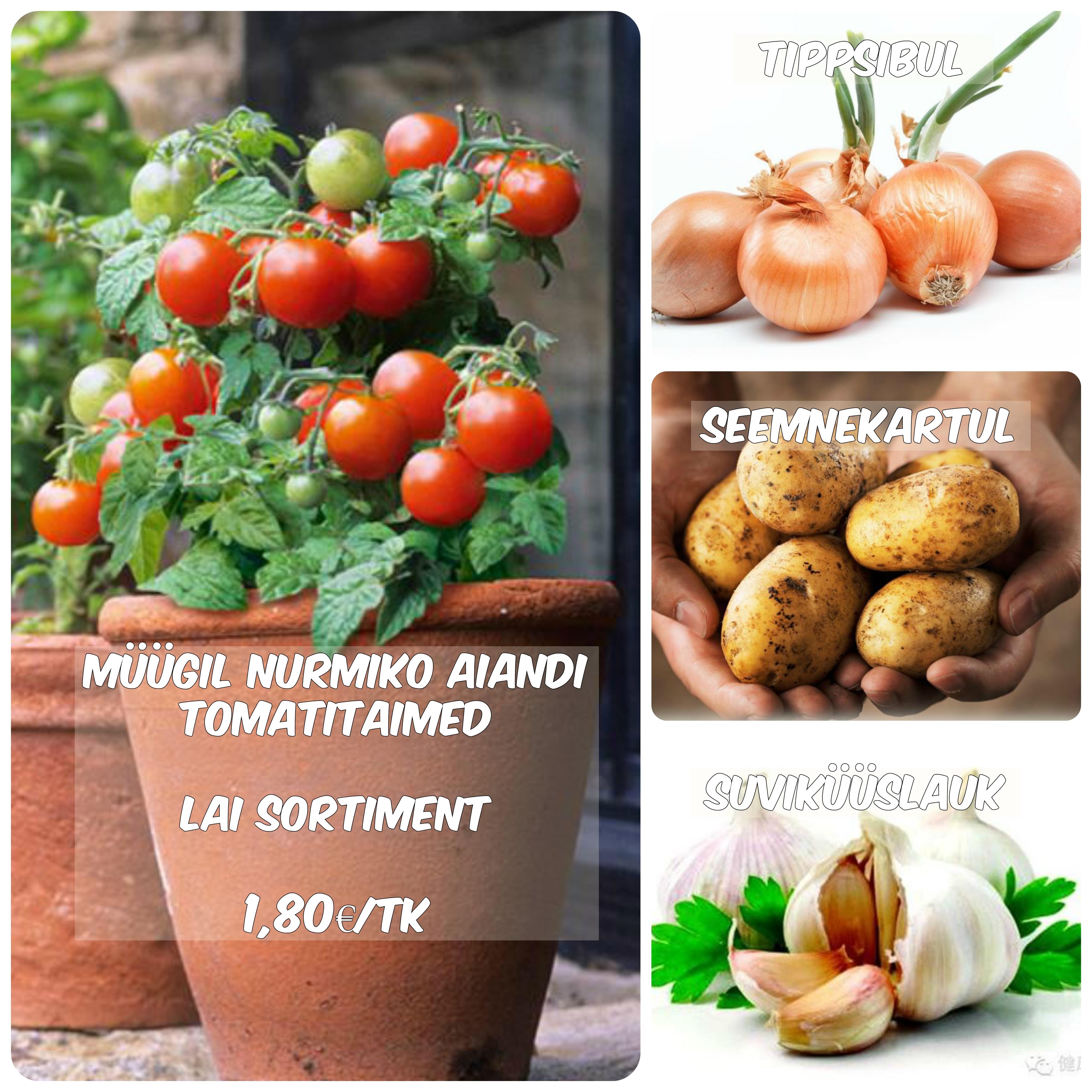 tomatitaimed.jpg