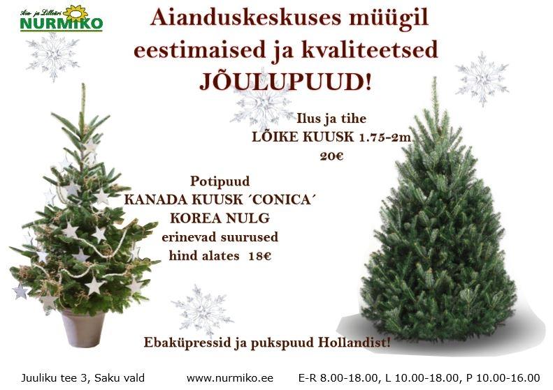 jõulupuud.JPG